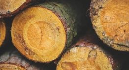 Basis in the World of Tax: Timber and Easements