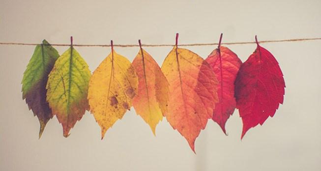 fall deadlines